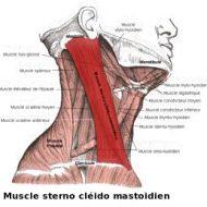 Muscles du cou douloureux