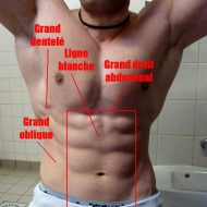 Musculation abdominaux bas