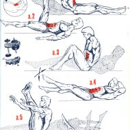 Musculation abdominaux exercices