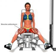Musculation adducteurs