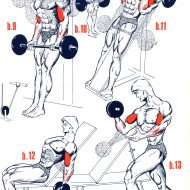 Musculation biceps programme