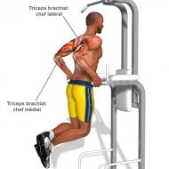 Musculation biceps triceps