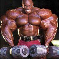 Musculation bodybuilding