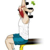 Musculation bras halteres