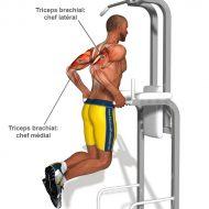 Musculation bras maison
