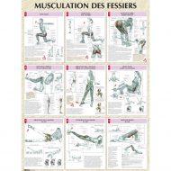 Musculation des fessiers