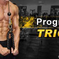 Musculation des triceps