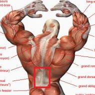 Musculation douleur dos