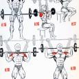 Musculation epaule programme