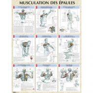 Musculation epaules