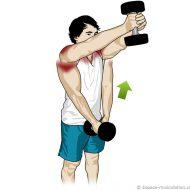 Musculation épaules haltères
