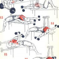 Musculation exercice pectoraux