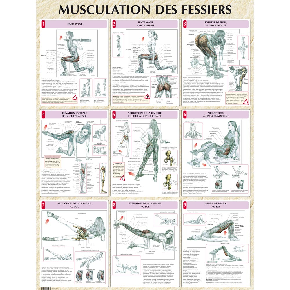 musculation fessiers