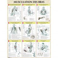 Musculation les bras