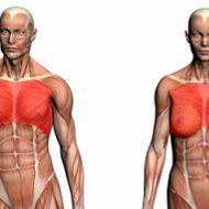 Musculation pectoraux femme