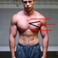 Musculation pectoraux haut