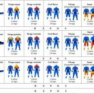 Musculation programmes