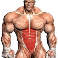 Musculation steroide