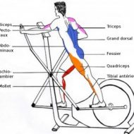 Musculation velo elliptique