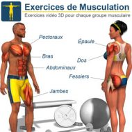 Musculations