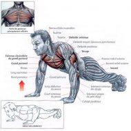 Pectoraux musculation sans matériel