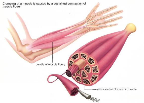 potassium muscle cramps