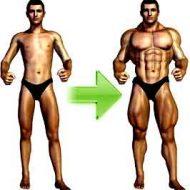 Produit pour muscler rapidement