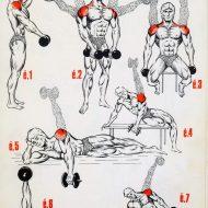 Programme d entrainement musculation epaule