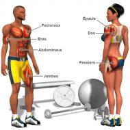 Programme de musculation en video