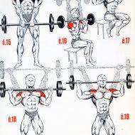 Programme musculation epaule