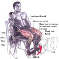 Programme musculation jambes
