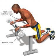 Programme musculation pour les bras
