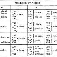 Régime protéiné musculation