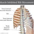 Rib muscle pain