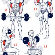 Séance musculation biceps