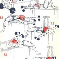 Séance musculation pectoraux