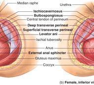 Vaginal muscle spasms