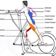 Vélo elliptique muscle quoi