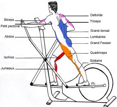 velo elliptique muscles