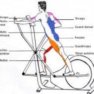 Vélo elliptique musculation