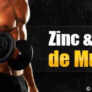 Zinc musculation