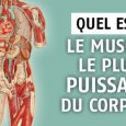 Muscle plus puissant corps humain