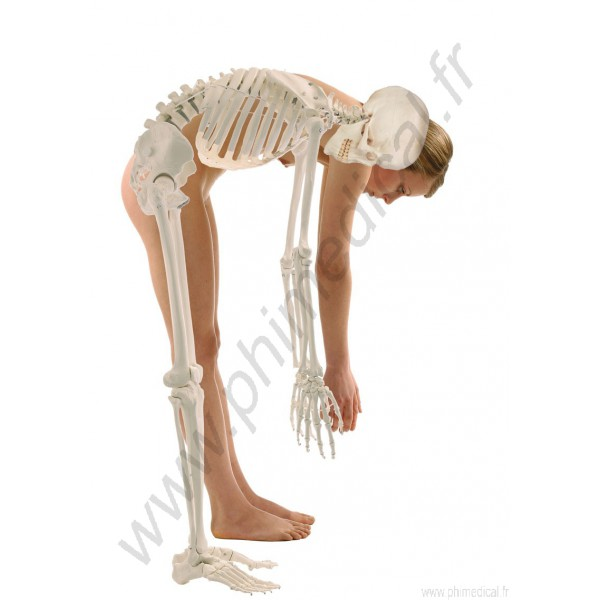 vente squelette humain en belgique